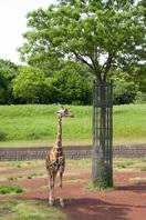 千葉市動物公園9