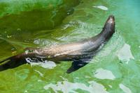 千葉市動物公園6