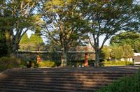 昭和の森 6