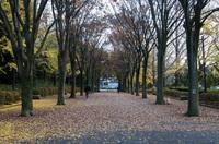青葉の森公園 1