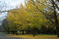 青葉の森公園 4