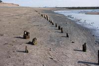 幕張の浜 1