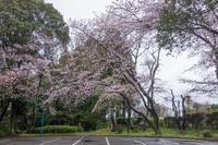 泉自然公園 5