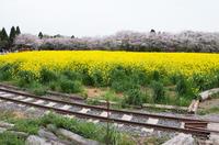 成田ゆめ牧場 4