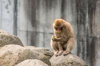 千葉市動物公園 1
