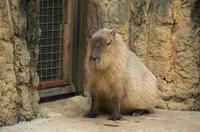 千葉市動物公園 5