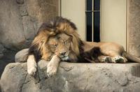 千葉市動物公園 8