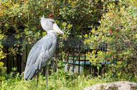 千葉市動物公園 10