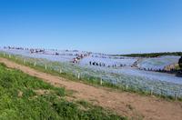 国営ひたち海浜公園 4