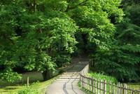 佐倉城址公園1