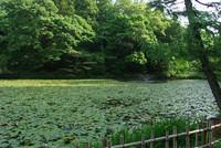 佐倉城址公園3