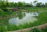 水郷佐原 水生植物園 1