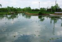 水郷佐原 水生植物園 2