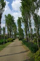 水郷佐原 水生植物園 7