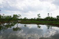 水郷佐原 水生植物園 3