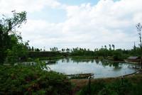 水郷佐原 水生植物園 4