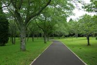 昭和の森 4