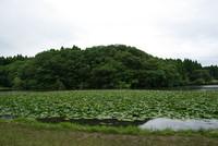 昭和の森 5