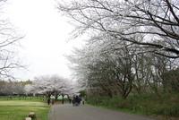 青葉の森公園4