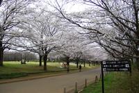 青葉の森公園2