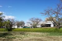 佐倉城址公園4