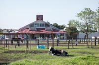 マザー牧場8