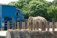 千葉市動物公園4