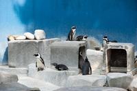 千葉市動物公園7