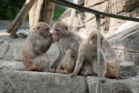 千葉市動物公園11