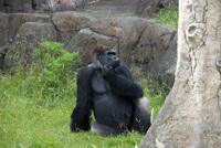 千葉市動物公園16