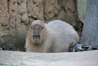 千葉市動物公園17