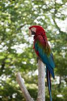 千葉市動物公園31