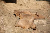 千葉市動物公園18