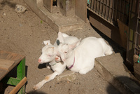 千葉市動物公園19