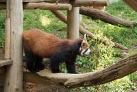 千葉市動物公園22