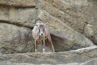 千葉市動物公園24