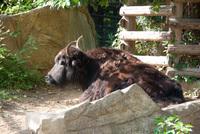 千葉市動物公園25