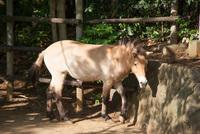 千葉市動物公園26
