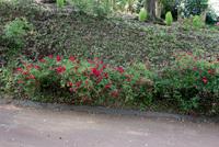 千葉市都市緑化植物園1