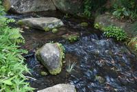 千葉市都市緑化植物園7