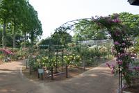 千葉市都市緑化植物園9
