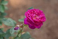千葉市都市緑化植物園14