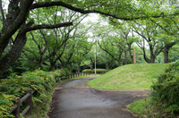 印旛沼公園 5