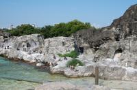 葛西臨海水族園 8