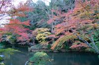 成田山 6