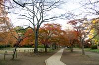 清水公園 2