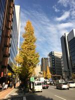 銀座の街路樹
