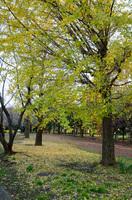 青葉の森公園 8
