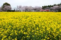 成田ゆめ牧場 9