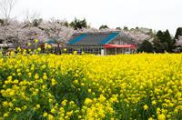 成田ゆめ牧場 10